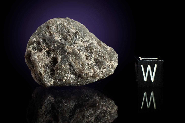 Darwin Glass 15.7 Grams