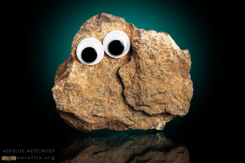 Pet-Rock-iii